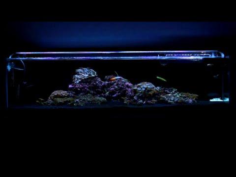 12 Gallon Mr. Aqua Reef Tank - Week 8