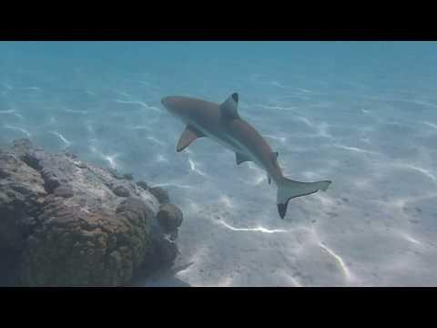Our Honeymoon in Moorea and Bora Bora