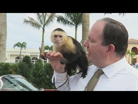 HOW TO GET A MONKEY!! (2018)