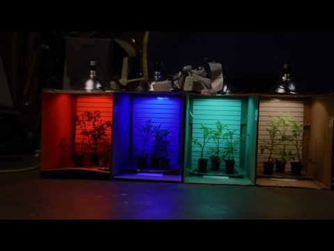 Affect of Colored Light on Plants 2