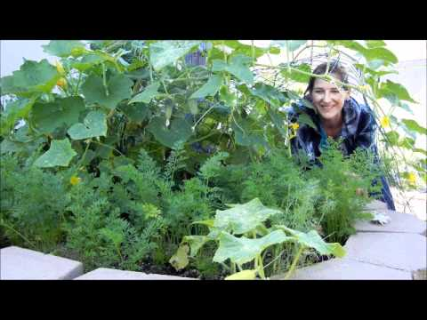 Grow Cucumbers Over Other Plants in a Small Space