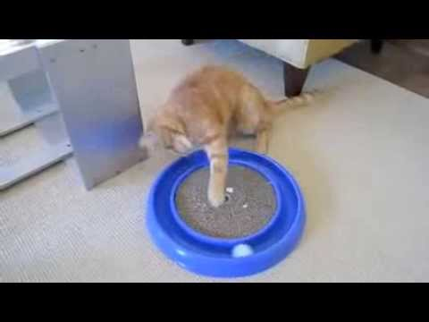 amazing toy to keep cats busy/entertained