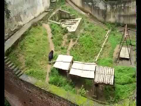 Zoo of Shimla |  शिमला का चिड़ियाघर
