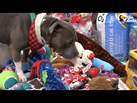 Shelter Pets Get To Pick Their own Toys | The Dodo
