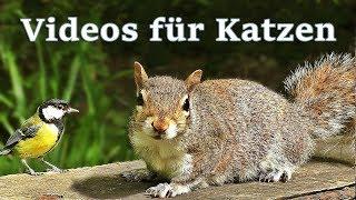Videos für Katzen Zum Spielen : Vögel und Eichhörnchen - 7 STUNDEN