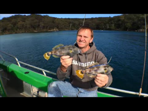 How to Catch Leatherjackets | The Hook and The Cook