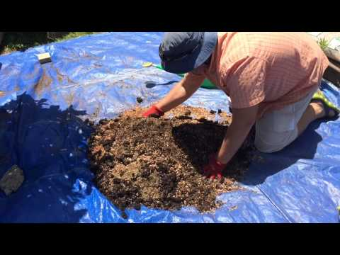 How to Make a Powerful Formula for Chilli Pepper Soil