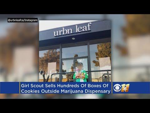 Girl Scouts Eye Whether Cookie Seller Near Pot Shop Broke Rules