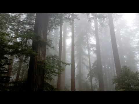 Foggy morning at Redwood National Park, CA