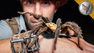 Download WILL IT BITE? Holding Huge Spider! Video