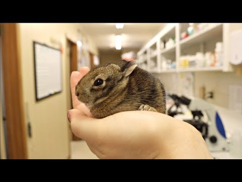 Ovarian Cysts & Oronasal Fistulas | Veterinary Vlog #27