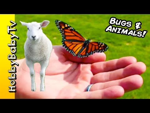 Flying BUGS + Fuzzy Animals! Cool Insects and Baby Animals, Learn Words HobbyBabyTV