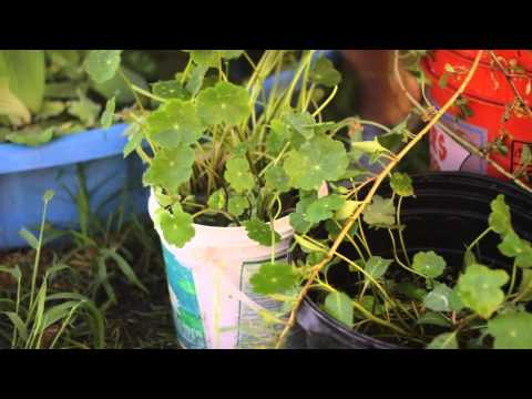 How to Plant Pond Plants Without Soil : Solving Plant Needs