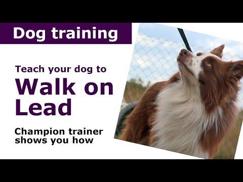 How to teach a dog to walk on a leash | Expert dog training tips