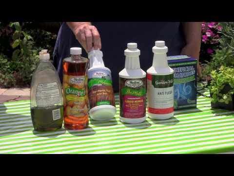 How to Kill Fire Ants Organically