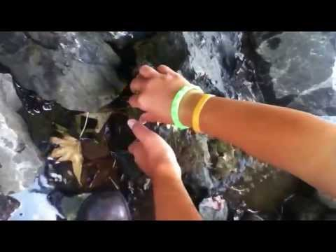 How to Catch Crawdads / Crayfish by Hand / Survival Food
