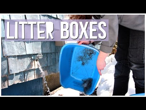 Cleaning Rabbit Litter Boxes