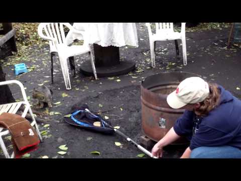 How to net a feral cat