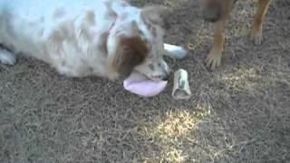 Valentine's Day Dog Toy from PetSmart Review