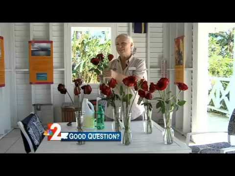 Good Question: How to lengthen the life of roses