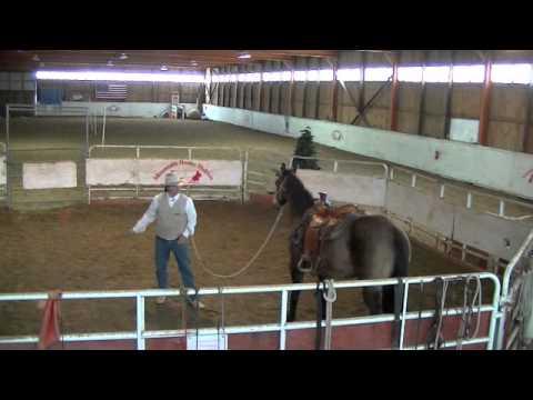 Horse Training - Restarting an Older Horse