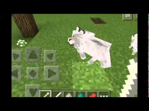 Minecraft PE: How to train and breed a wolf