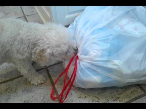 Dog vs. The garbage bag