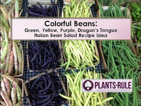 Colorful Beans at Farmers Market: Purple, Yellow, Dragon's Tongue from Plants-Rule