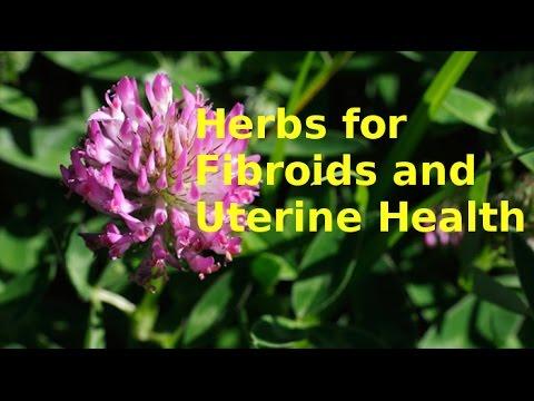 HERBS FOR FIBROIDS - TUMOURS - UTERUS - FEMALE