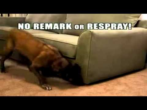 Stream Clean Get Rid of Pet Stains Odors