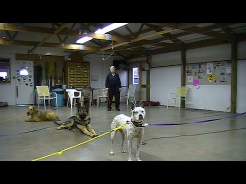 Dogs Behaving at a Distance