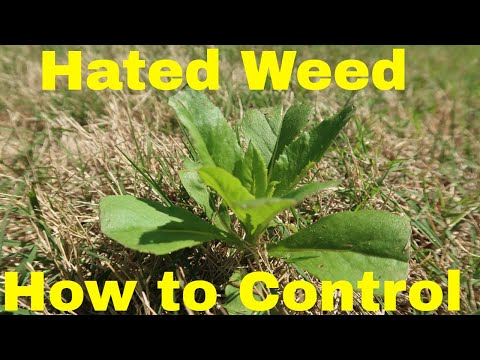 Spring Weed Control Tips for Hated Weed in Lawn