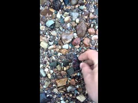 Killer Illinois creek find! Not sure of rock type.