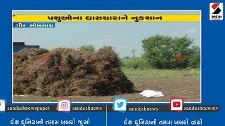 Gir Somnathમાં કમોસમી વરસાદના કારણે farmersની હાલત કફોડી  ॥ Sandesh News TV