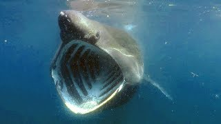 Toothless! 3 Sharks That Don't Bite | SHARK WEEK