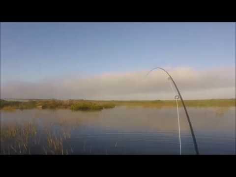 Redfish on the fly Port Aransas Texas