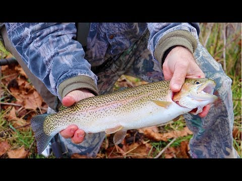 Winter Trout Fishing a Small Creek (Cripple Creek, Virginia)