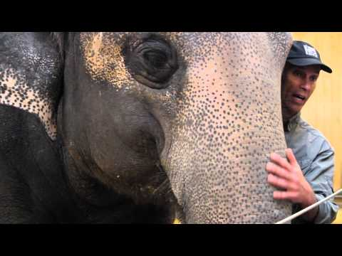 ELEPHANT POACHING EXPLAINED in 90 SECONDS
