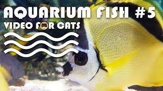 FISH VIDEO FOR CATS - Aquarium Fish #5. Entertainment Video for Cats to Watch.