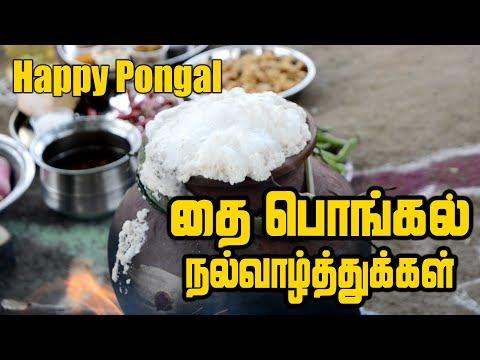 Pongal Celebration | தை பொங்கல் திருநாள் | Pongal celebration In village | Full Pongal Lunch Menu