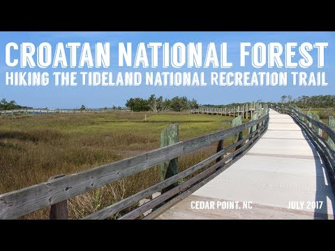 Tideland National Recreation Trail | Croatan National Forest | Wandering Around In Wonder
