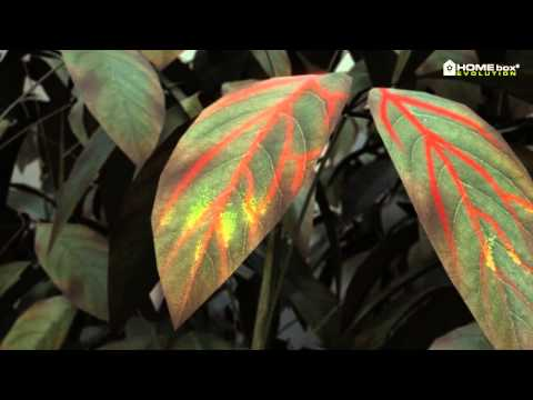 HOMEbox Evolution—World's Most Advanced Grow Tent (2014)