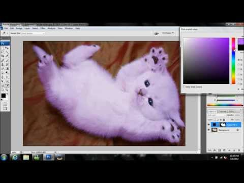 Changing a Kitten's fur with Photoshop