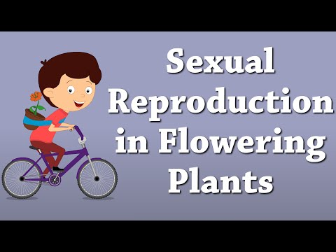 Sexual Reproduction in Flowering Plants | It's AumSum Time