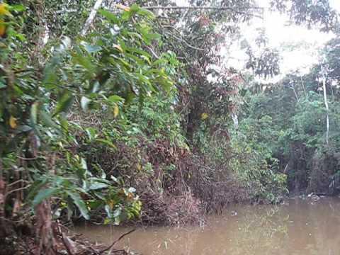 Amazon Rainforest near Iquitos Peru