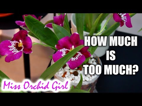 About buying Orchids - Budgets, ebay auctions, forming a collection