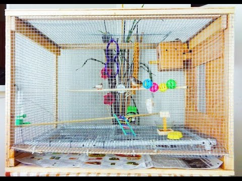 DIY  Bird Cage Small Aviary For My Zebra Finch  Homemade Bird Cage