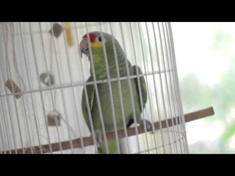 Parrot devotees - First word
