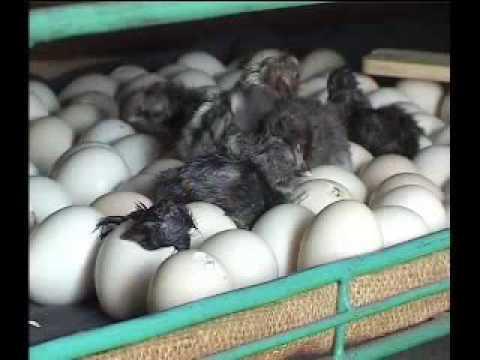 Mini hatchery Part 3