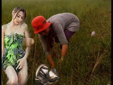 Amazing Beautiful Girl Catching Snail|How To Find Snails In Cambodia|Beautiful Girl Catch Fish